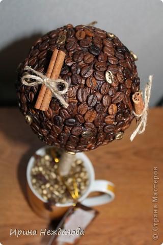 Самый первый экземпляр... Топиарий кофейный с палочками корицы. Еще потом лентоки атласные на ствол около кроны завязала - коричневую и золотистую, но не сфотографировала к сожалению... фото 3