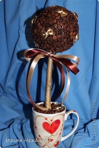 Самый первый экземпляр... Топиарий кофейный с палочками корицы. Еще потом лентоки атласные на ствол около кроны завязала - коричневую и золотистую, но не сфотографировала к сожалению... фото 9