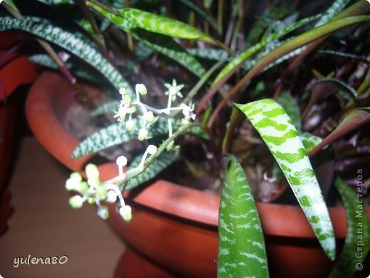 """Мой """"домашне-цветоводческий"""" стаж совсем небольшой - около 10 лет. Раньше просто растишки стояли на окне, стоят и стоят, просто растут. Чаще всего я покупала растения в магазинах. Года 3-4 назад я  по-другому стала смотреть на моих зеленых домочадцев, появился интерес выращивать растения из семян. На этом фото мои пока еще малявки. Драцену погрыз кот, пришлось сделать ей стрижку. Фикус (здесь ему 2 года) теперь стал выше меня, с кротоном пришлось повозиться... Ну, обо всем по порядку. фото 6"""