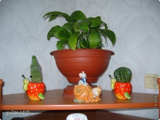 """Мой """"домашне-цветоводческий"""" стаж совсем небольшой - около 10 лет. Раньше просто растишки стояли на окне, стоят и стоят, просто растут. Чаще всего я покупала растения в магазинах. Года 3-4 назад я  по-другому стала смотреть на моих зеленых домочадцев, появился интерес выращивать растения из семян. На этом фото мои пока еще малявки. Драцену погрыз кот, пришлось сделать ей стрижку. Фикус (здесь ему 2 года) теперь стал выше меня, с кротоном пришлось повозиться... Ну, обо всем по порядку. фото 4"""