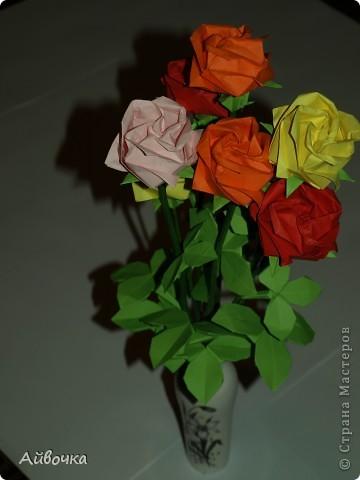 роза кавасаки фото 1
