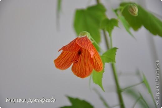 Мои цветочки фото 6