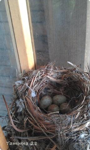 Благодаря одной птахи( спасибо за идею) появился скворечник!!!!! фото 3