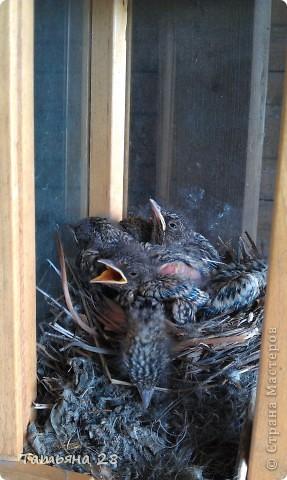 Благодаря одной птахи( спасибо за идею) появился скворечник!!!!! фото 10