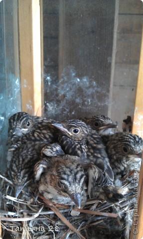 Благодаря одной птахи( спасибо за идею) появился скворечник!!!!! фото 11