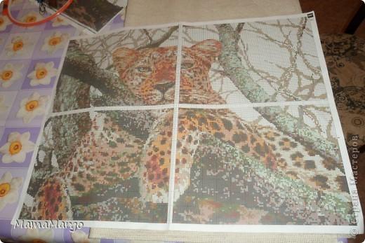 Леопард Канва фото 8