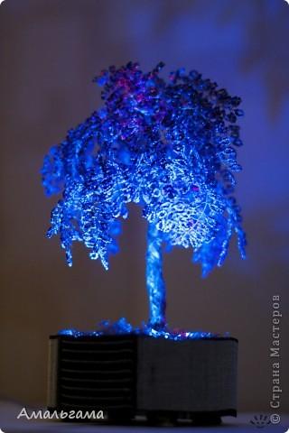 Это мое деревце при нормальном освещении фото 2