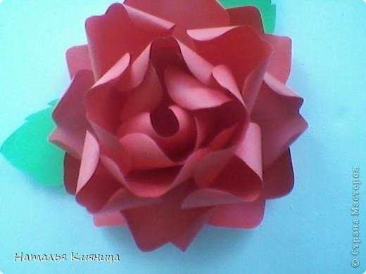 Розы из офисной бумаги по МК  лика2010. фото 2