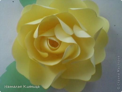 Розы из офисной бумаги по МК  лика2010. фото 3