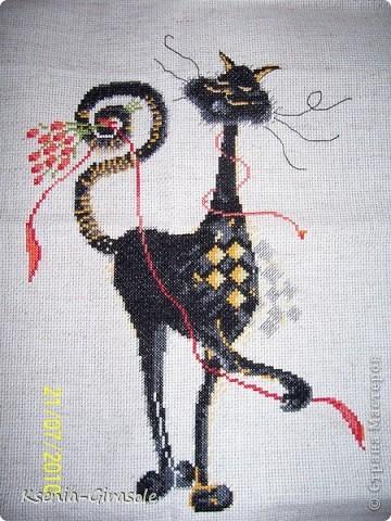 Чёрный кот на удачу