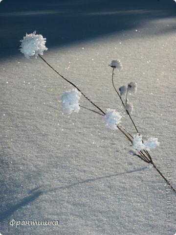 Люблю фотографировать природу, а зимой фотографии просто сказочные! фото 2