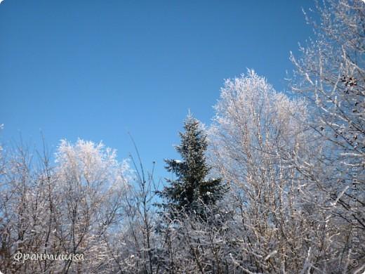 Люблю фотографировать природу, а зимой фотографии просто сказочные! фото 3