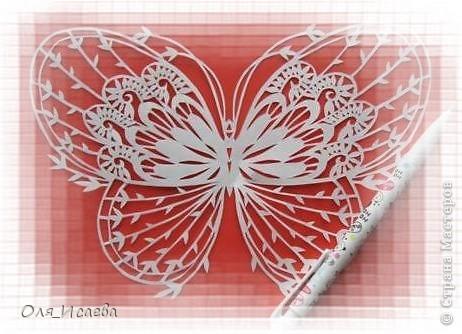 Опять бабочки фото 6