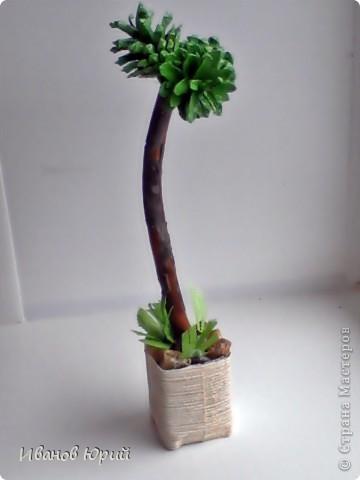 деревья из шишек фото 2