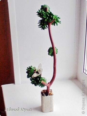 деревья из шишек фото 3