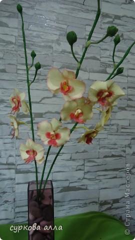 первая орхидея