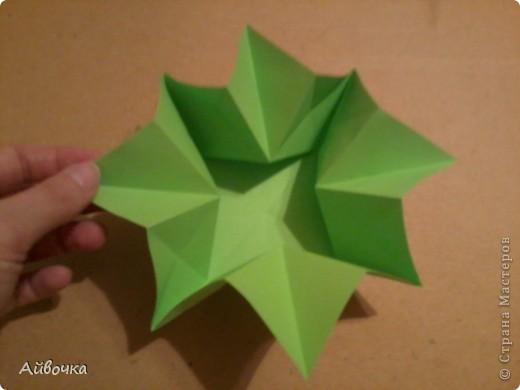 роза кавасаки фото 8