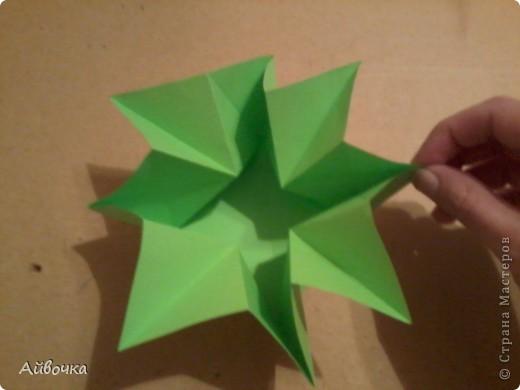 роза кавасаки фото 9