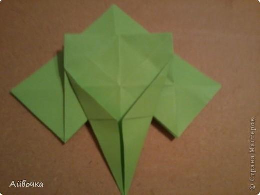 роза кавасаки фото 23