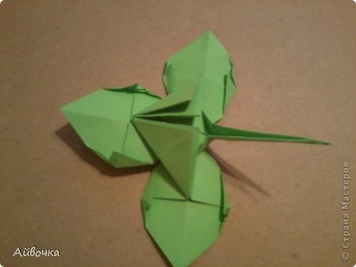 роза кавасаки фото 33