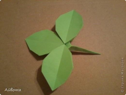 роза кавасаки фото 34