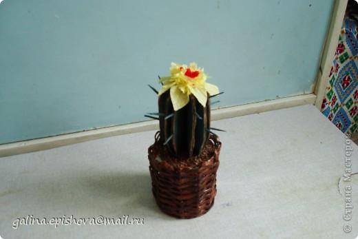 Вот такой кактус у меня получился из ненужного картона. Заготовочки обклеила салфетками темно-зеленого цвета. Цветок тоже из салфеток. фото 1