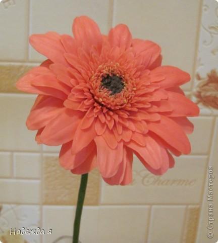 Слепила герберку, цветок 10 Х 10. Серединка получалась легко, а вот большие листочки с трудом, казалось бы простые лепесточки, надо молды поискать такие. фото 1