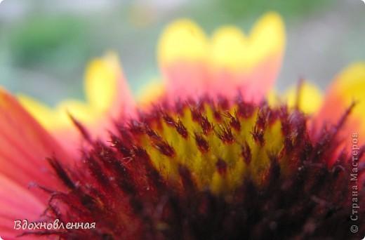 Ягодки-цветочки )) фото 15