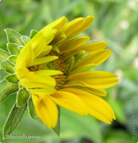 Ягодки-цветочки )) фото 14