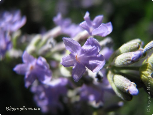 Ягодки-цветочки )) фото 5