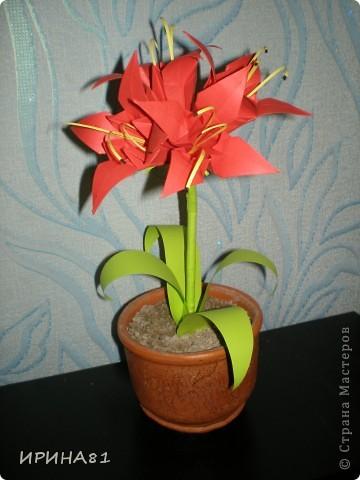 АМАРИЛЛИС.  Весьма красивоцветущее многолетнее луковичное растение. Родина этого растения – Африка. Листья у амариллисов линейно-языковидные. Большие цветы с превосходным запахом сидят на высоких  плотных цветочных стрелках. Крупные луковицы могут образовать 1-2 цветочные стрелки с 6-12 цветами белого, розового, красного цвета. Цветки собраны в соцветия, образующие шикарные букеты.  Настоящий амариллис цветёт осенью.