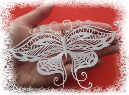 Опять бабочки фото 2