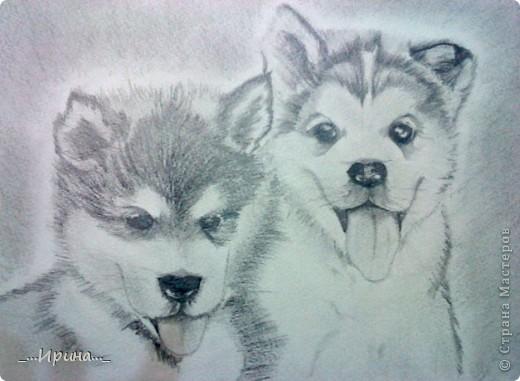 Увидев этих прекрасных щенков, решила их нарисовать. Рисунок с фотографии.