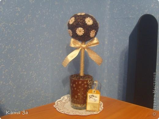 Ароматное кофейное деревце.  :) фото 1