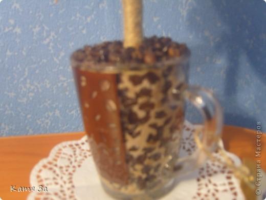 Ароматное кофейное деревце.  :) фото 3