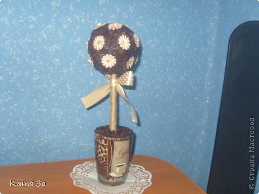 Ароматное кофейное деревце.  :) фото 4
