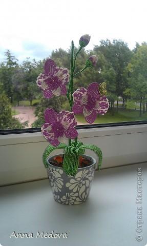 Мини орхидейка фото 3
