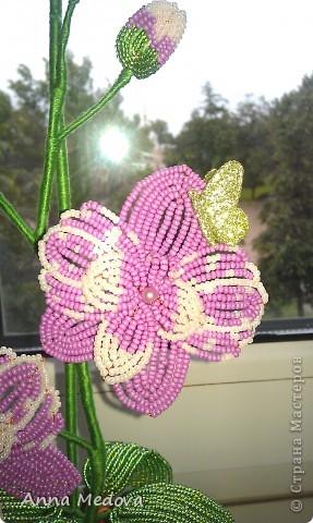 Мини орхидейка фото 1