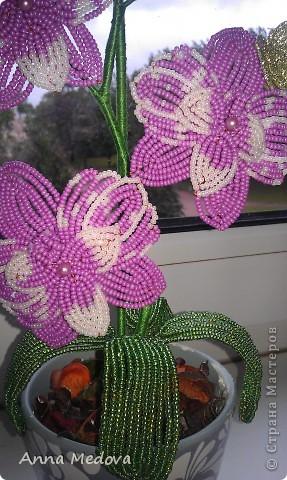 Мини орхидейка фото 2