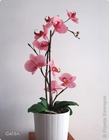 И опять *мой тропический мотылек*. Так хочется уже попробовать другие виды орхидей, но заказали снова фаленопсис. Работой не совсем довольна, слишком мало дали время,орхидеи нужно делать не спеша.По форме ,вроде бы ничего получился.примерно как задумывала. фото 1