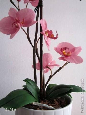 И опять *мой тропический мотылек*. Так хочется уже попробовать другие виды орхидей, но заказали снова фаленопсис. Работой не совсем довольна, слишком мало дали время,орхидеи нужно делать не спеша.По форме ,вроде бы ничего получился.примерно как задумывала. фото 2