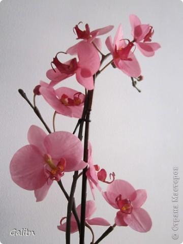 И опять *мой тропический мотылек*. Так хочется уже попробовать другие виды орхидей, но заказали снова фаленопсис. Работой не совсем довольна, слишком мало дали время,орхидеи нужно делать не спеша.По форме ,вроде бы ничего получился.примерно как задумывала. фото 3