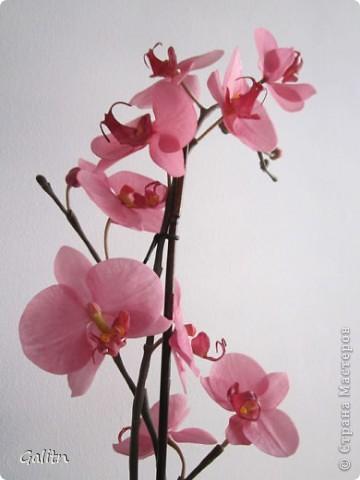 И опять *мой тропический мотылек*. Так хочется уже попробовать другие виды орхидей, но заказали снова фаленопсис. Работой не совсем довольна, слишком мало дали время,орхидеи нужно делать не спеша.По форме ,вроде бы ничего получился.примерно как задумывала. фото 5