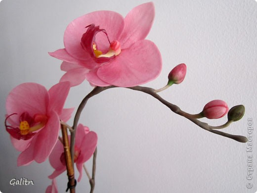 И опять *мой тропический мотылек*. Так хочется уже попробовать другие виды орхидей, но заказали снова фаленопсис. Работой не совсем довольна, слишком мало дали время,орхидеи нужно делать не спеша.По форме ,вроде бы ничего получился.примерно как задумывала. фото 6