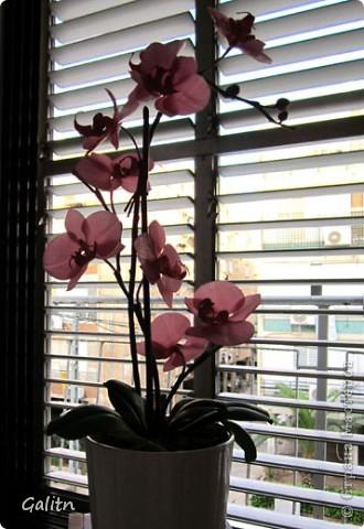 И опять *мой тропический мотылек*. Так хочется уже попробовать другие виды орхидей, но заказали снова фаленопсис. Работой не совсем довольна, слишком мало дали время,орхидеи нужно делать не спеша.По форме ,вроде бы ничего получился.примерно как задумывала. фото 7
