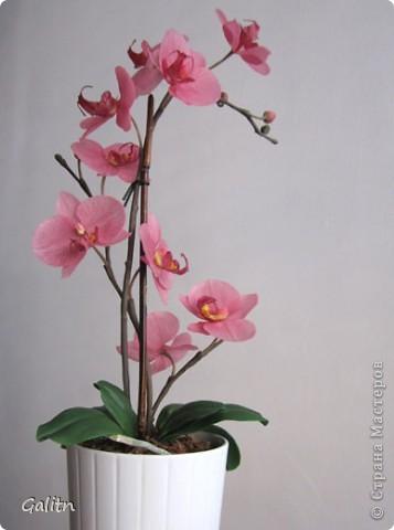 И опять *мой тропический мотылек*. Так хочется уже попробовать другие виды орхидей, но заказали снова фаленопсис. Работой не совсем довольна, слишком мало дали время,орхидеи нужно делать не спеша.По форме ,вроде бы ничего получился.примерно как задумывала. фото 8