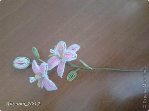 Лилия фото 2