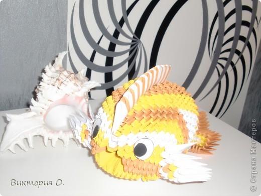 Золотая рыбка фото 5