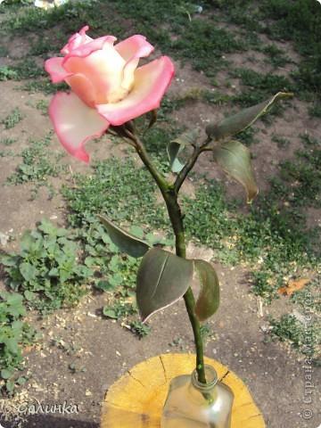 Всегда просматривала  в стране мастеров большие розы и тихо завидовала, не решаясь на такой подвиг- сделать розу во весь рост.Но вот всё таки слепила, на первый раз пойдёт.Листья забыла сделать зубчиками,извиняйте.Лепила по памяти. фото 4