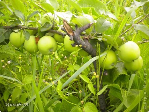 Еще один горшочек с яблочками. фото 4
